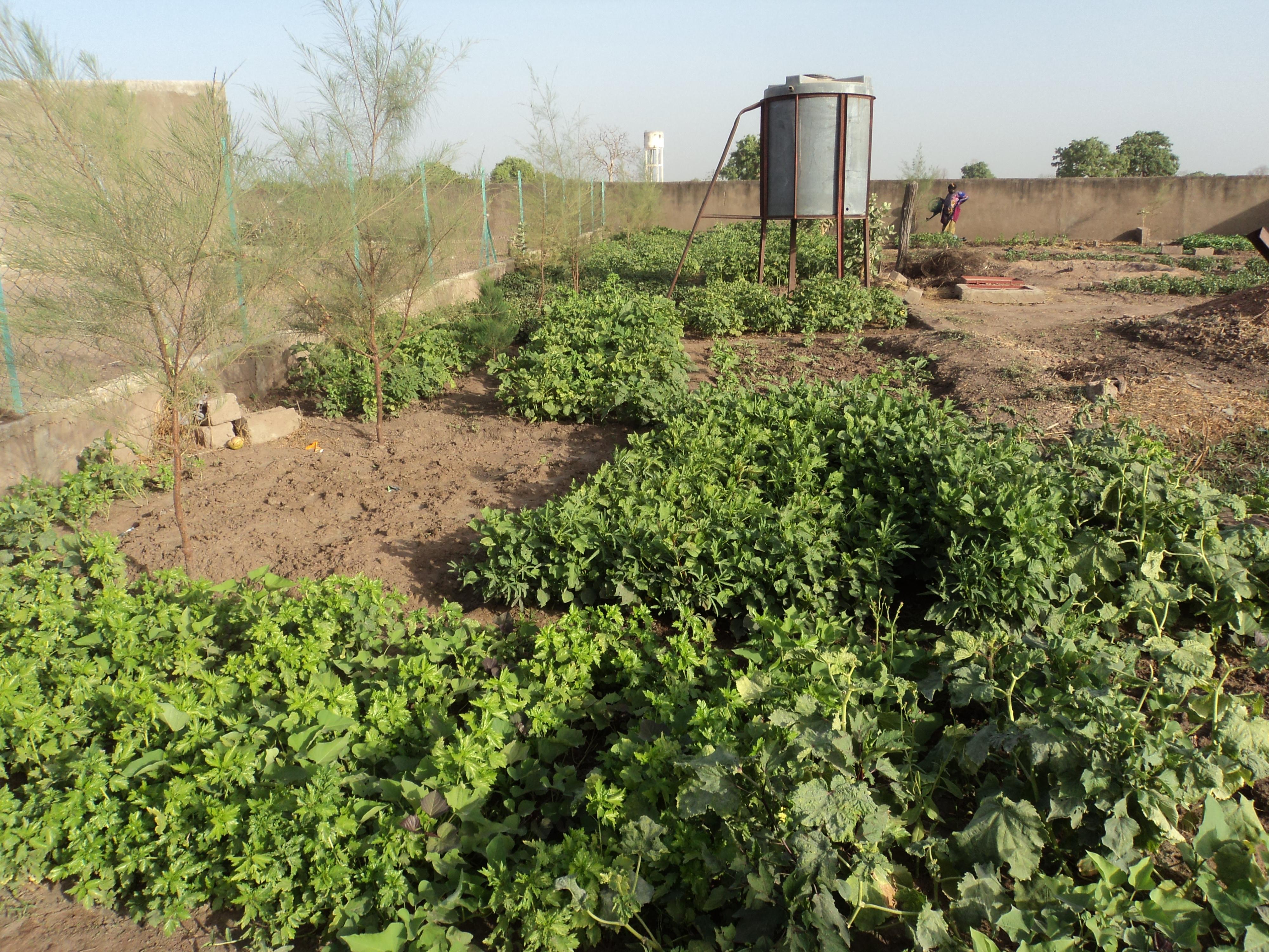 Soutenez le jardin maraicher scolaire de Medina-Mary